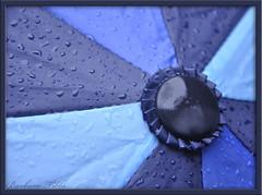 Raindrops Keep Falling on My Head (Explored) (misst.shs) Tags: blue macro rain umbrella nikon explore raindrops northidaho d90 butchcassidyandthesundancekid explored macromondays personalsoundtrack