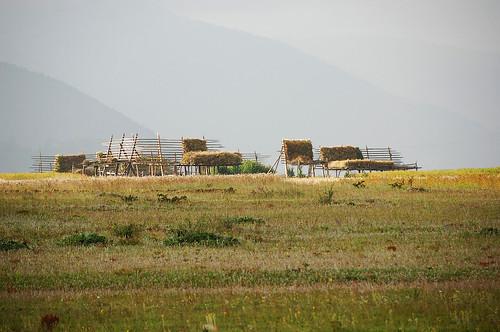 香格里拉(shangri-ra)