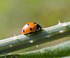 Lady Bug-2 - by Property#1