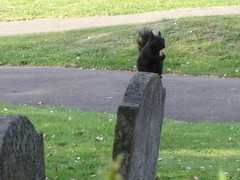 Squirrel On A Gravestone - by Limbo Poet