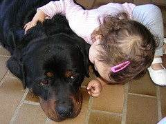 motherly love (alzeus1) Tags: dogs zeus amelia rottweiller