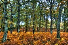 Do you like autumn? (J.M.Alonso) Tags: autumn flickr estrellas hdr flickraward nikonflickraward