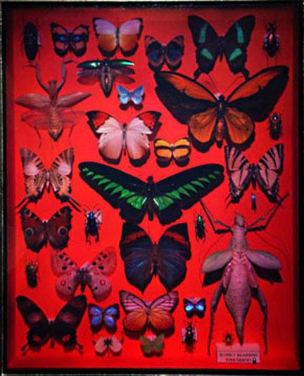YG_Butterflies