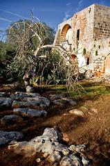 (_Blaster_) Tags: blue sky italy tree rock alberi italia pentax cielo rocce salento puglia manduria blaster pentaxkx masseria theauthorsclub corticauri