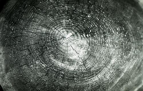 Mushroom Detail #1