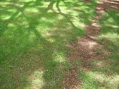 Day7-Maui-Kula Botanical Garden (Amudha Irudayam) Tags: beach garden botanical hawaii maui kula amudha