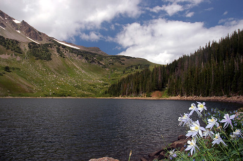 Columbine Beside Blue Lake