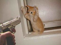 kitten the Slayer (kitten the Slayer @ Jinx.com) Tags: kitten jinx kittentheslayer thejinxkitten