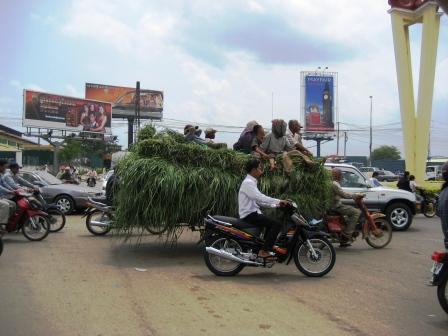 Grassy Ride