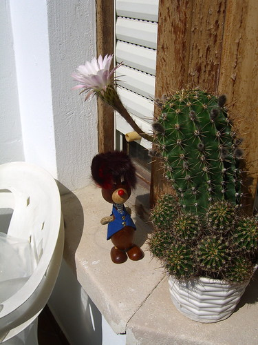 Visiting with Mr. Cactus