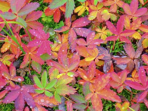 tundra autumn7