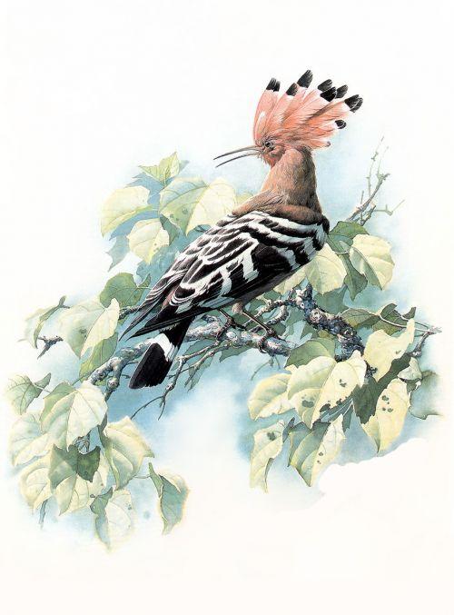 1474340629 4355aa5b7e o - cute bird paintings