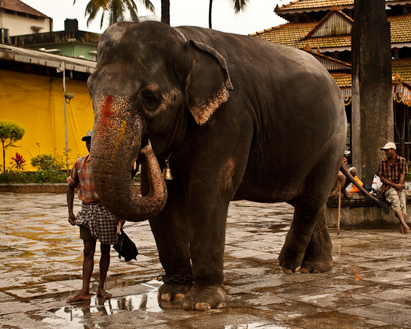 Temple elephant, Sringeri - Chitra Aiyer Photography