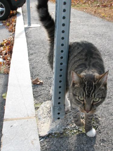 Mystery kitty!