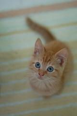 DSC_0635 (*lalalaurie) Tags: thanks kittens kitties lauriecinotto ibkc pleasedontusemypictureswithoutseekingmypermission ttybittykittycommittee