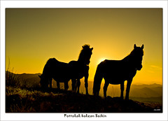 Pottokak Saibin... (Jabi Artaraz) Tags: lighting light horse naturaleza sol nature beautiful animal fauna atardecer amazing gorgeous natur natura zb silueta lovely bizkaia euskalherria vizcaya basquecountry 1000views saibi paysbasque animaliak yeguas eguzkia beautifulearth digitalcameraclub supershot 1000vistas euskoflickr fineartphotos fantasticnature abigfave ilunsentia superaplus aplusphoto flickrbest impressedbeauy diamondclassphotographer flickrdiamond pottokak excapture jartaraz bestofblinkwinners blinksuperstars