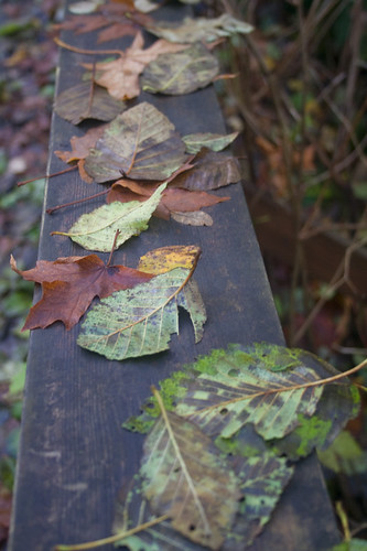 leaf assortment