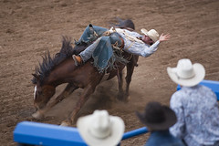 Cody Nite Rodeo - Bronc Riding (anadelmann) Tags: horse usa action fla