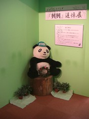 memorial exhibition for Kou Kou (TaoTaoPanda) Tags: panda koukou ojizoo