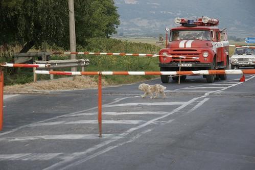 Dog Crossing on Bulgaria State Railways Septemvri--Bankso 760mm gauge line, just south of Septemvri, Bulgaria, February, 2007