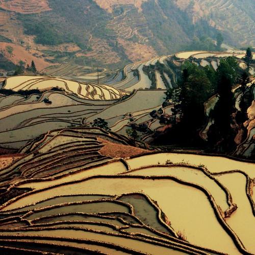 rice terraces, yuanyang
