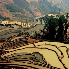 rice terraces, yuanyang (GraemeNicol) Tags: china charity landscape asia rice terraces scenic culture engineering yunnan ethnic minority development hani sustainable ngo paddies ecotourism yuanyang worldvision   honghe  holidaysvancanzeurlaub xinjie
