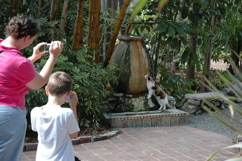 Me and the Boy and a Cat and a Fountain