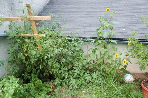 Garden, 2007