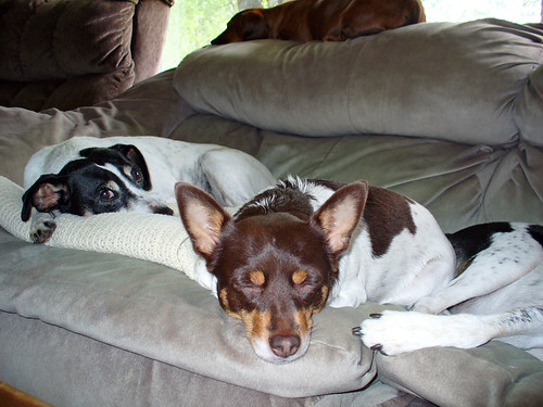 2007-08-20 - Sleepy Dogs - 0005