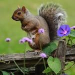 Squirrel posing - Écureuil en pose