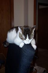 Mmmmm, Chair.
