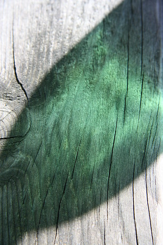 Green Reflection on a Wooden Bench