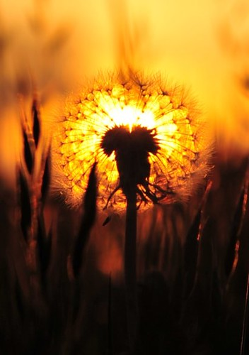 31 Creative Examples of Backlit and Rimlit Photos