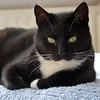 May I introduce:????????????  See the second picture. (Cajaflez) Tags: pet baby cute cat kat chat with grandson tuxedo newborn katze cortez gatto gatti kater kleinzoon pasgeboren saariysqualitypictures thebestofmimamorsgroups