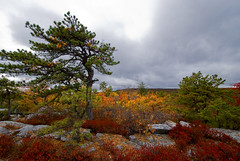 Minnewaska State Park -- Pine tree and blueberry bushes (Katy Silberger) Tags: red orange cloudy fallfoliage shawangunks newpaltzny minnewaskastatepark blueberrybushes nikond60 shawangunkridge colorphotoaward gertrudesnosetrail