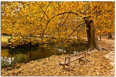 (Antonio Carrillo (Ancalop)) Tags: park parque autumn espaa canon hojas spain europe tokina murcia otoo marques fuentes 1224mm caravaca ancalop