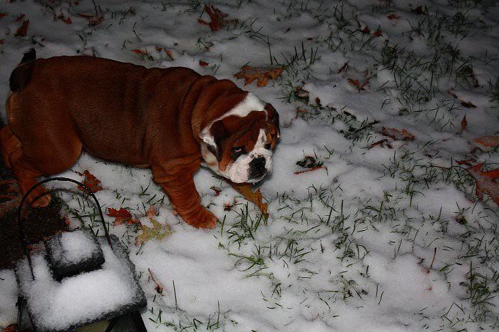 First snow 11-10