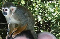 That's my head under that monkey!