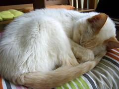 cat older