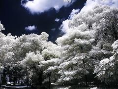 City Snapshot in Infrared (hk_traveller) Tags: city blue trees bw white black canon ir photo interestingness interesting flickr snapshot explore turbo infrared g1 canong1 140 r72 top500 interesting1 i500 turbophoto anawesomeshot