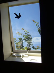 Newly Free Hummingbird - Seattle, WA (liquidnight) Tags: seattle streetart bird hummingbird stickers decal communityart ephemeralart windowzoo