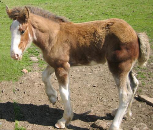 eFoal