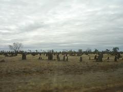 Termite wasteland1