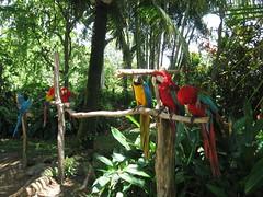 Day9_Maui_GardenOfEden_Hana2 (Amudha Irudayam) Tags: beach garden hawaii maui hana eden amu parrots amudha