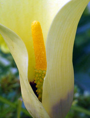 reaching for the sun (Brian Negus) Tags: flower yellow lily excellence specnature