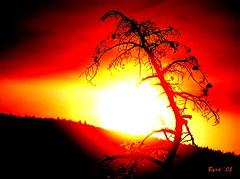 Eye of the fire god (Byrd on a Wire) Tags: sunset canada color colour nature silhouette photoshop wow okanagan imagepoetry abigfave diamondclassphotographer flickrdiamond imageposie