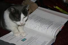 kitty 004