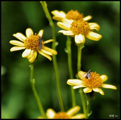 EXPLORE THIS!! (Wenspics) Tags: flowers woman hot nature yellow female canon garden naked nude rebel petals interestingness fantastic weeds bravo pretty dof natural bokeh awesome explorer insects bugs explore rebelxt lovely delicate goodluck femalephotographers i500 arethesetagsheretogainattraction