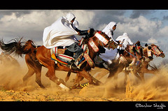 Ride Like a Wind ! (Bashar Shglila) Tags: horses horse interesting with action shots sony traditional taken horsemen libya tripoli outfits bashar cavalry ly l