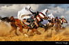 Ride Like a Wind ! (Bashar Shglila) Tags: horses horse interesting with action shots sony traditional taken horsemen libya tripoli outfits bashar cavalry ly libyan galope سيد سيدي حصان ليبيا خيل فرس فرسان bentaher dschx1 bestcapturesaoi السايح shglila ملهاد mygearandmepremium mygearandmebronze mygearandmesilver mygearandmegold mygearandmeplatinum mygearandmediamond tplringexcellence السبيب stunningphotogpin flickrsfinestimages1 potd:country=menaar